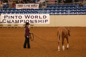 2X Reserve World Champion at the Pinto World Show!